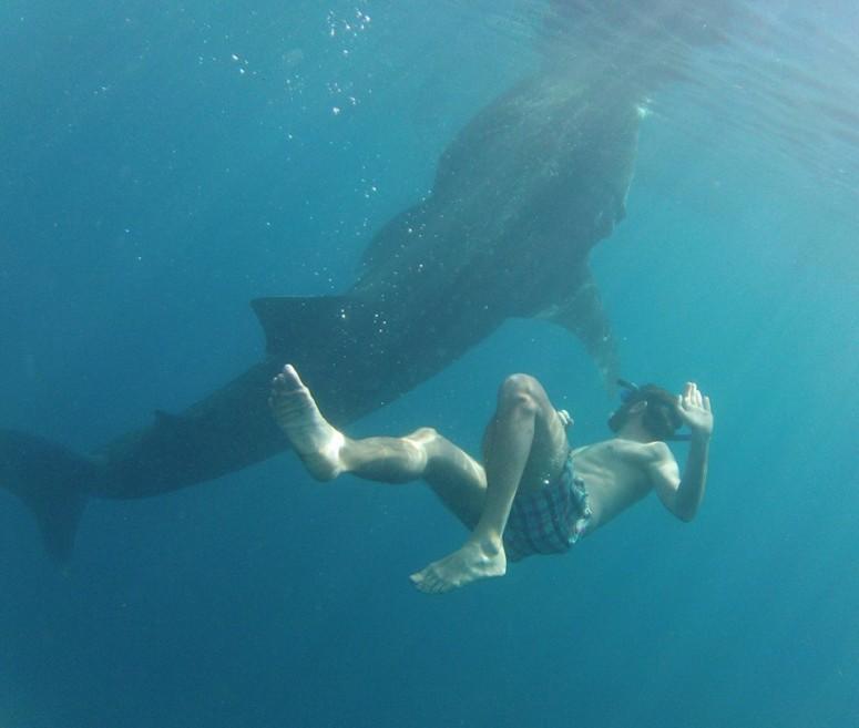 Whaleshark Encounter