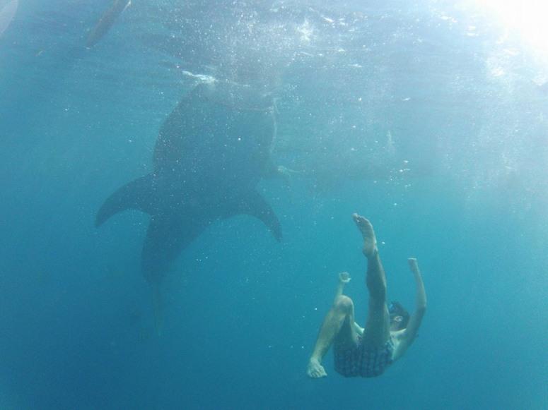 Whaleshark Encounter_1